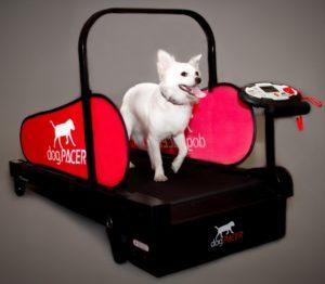 dogtreadmill_minipacer