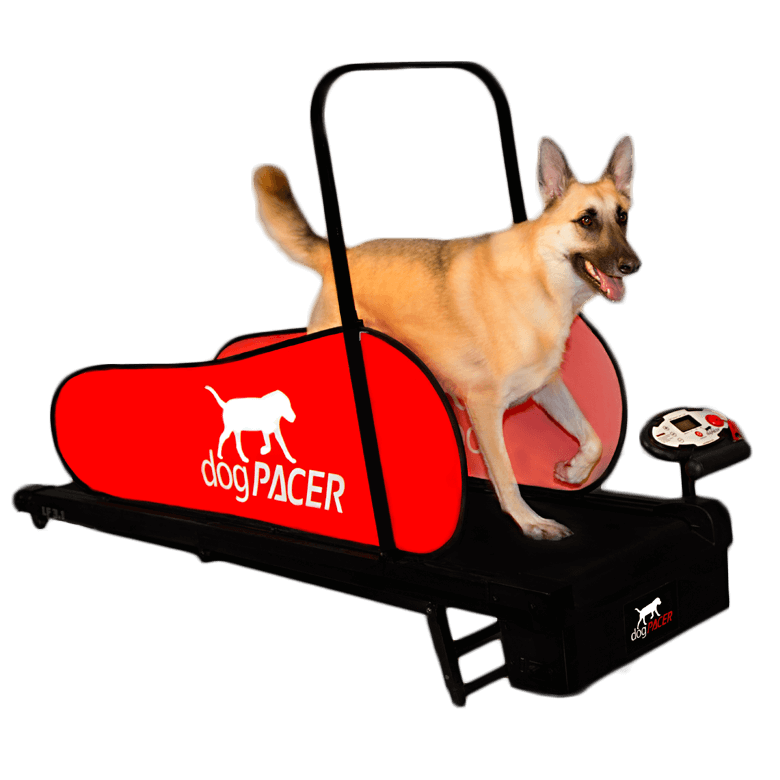 Small Dog Treadmill For Sale