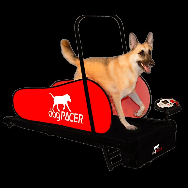 dogtreadmill_dogpqacerlf31