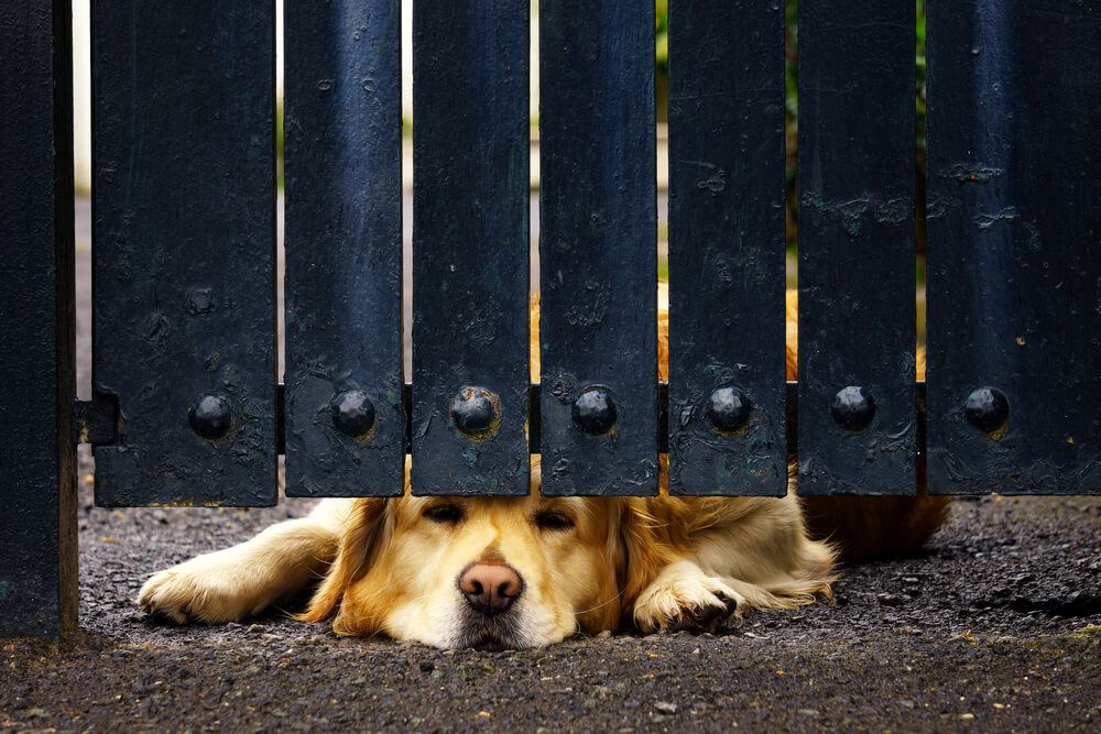 Wireless Dog Fence Reviewsshutterstock 414104683