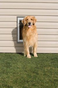 PetSafe Wall Pet Door