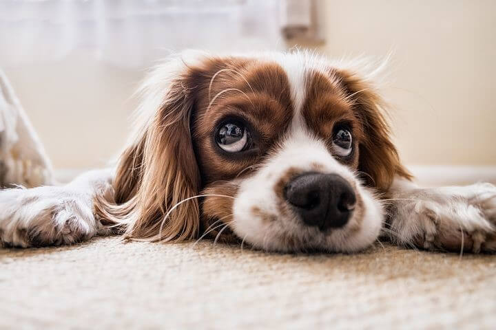 CBD For Dogs' Cancer: Ways CBD Can Help Your Dogs