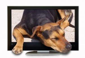 dog and televison