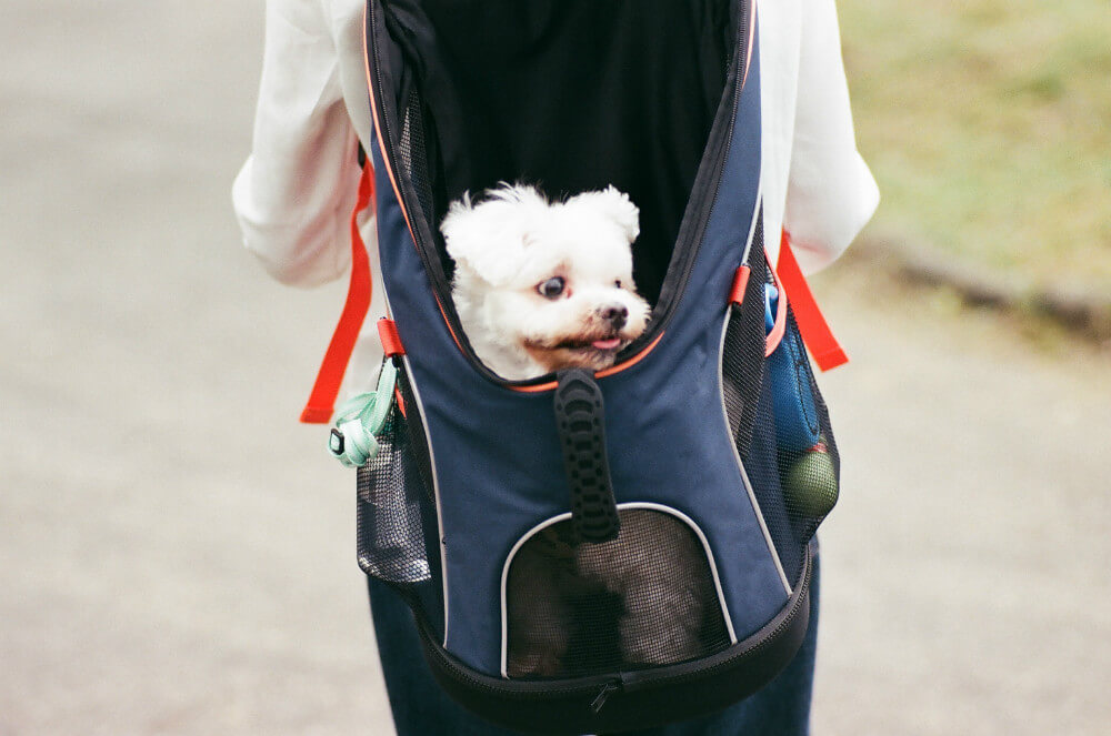 dog carrier backpacks