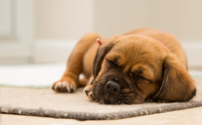 Types Of Dog Sleeping Positions And What They Mean