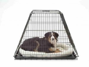 heavy dog crate