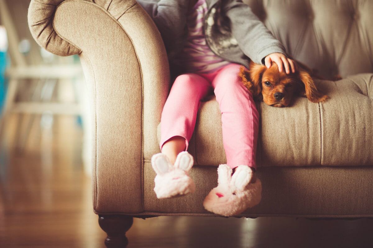 How Remove Dog Hair From Furniture