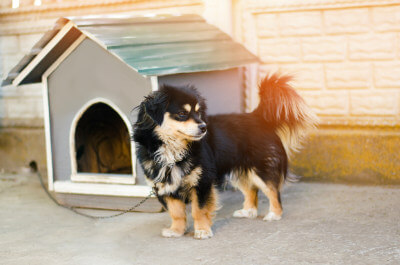 How To Get Your Dog To Like His Dog House